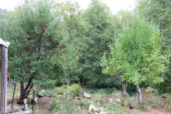 apple.trees.homestead.house