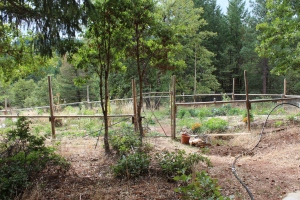 Yogi.garden.front
